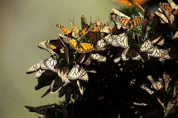 Mind control series monarch